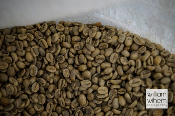 the dried green coffee beans, ready for roasting.