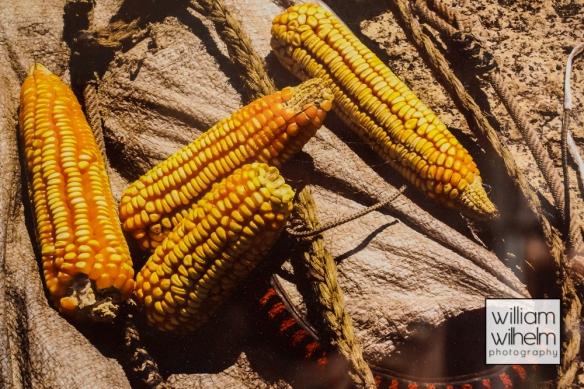 Aztecan Maize