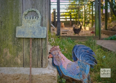Crow-Farm-Vineyard-10