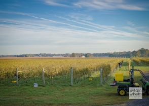 Crow-Farm-Vineyard-11