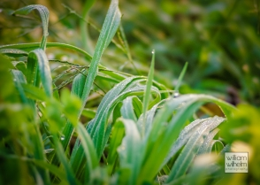 Frost on the grass!